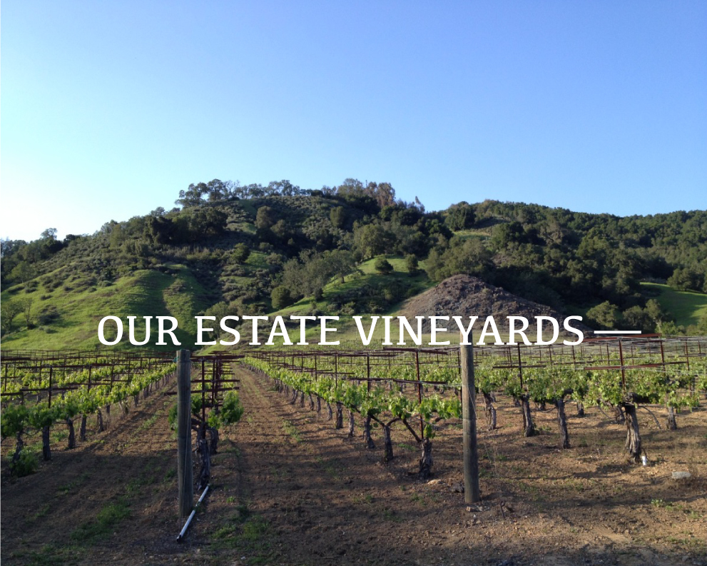 Martin Ranch Winery Estate Vineyards.jpg