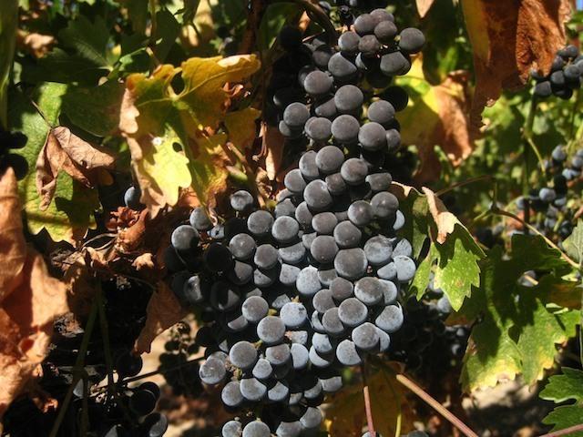harvest-10-09 30.jpeg