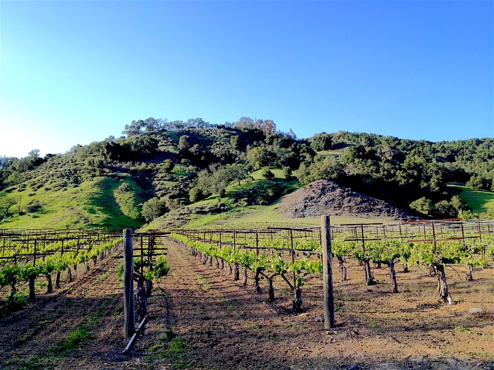 Upper vineyards
