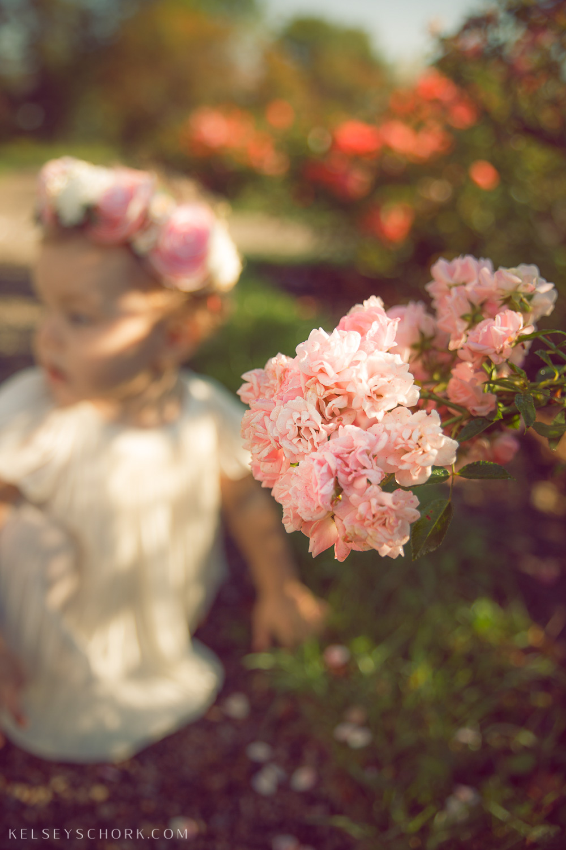 Carroll_delaware_park_rose_garden-5.jpg