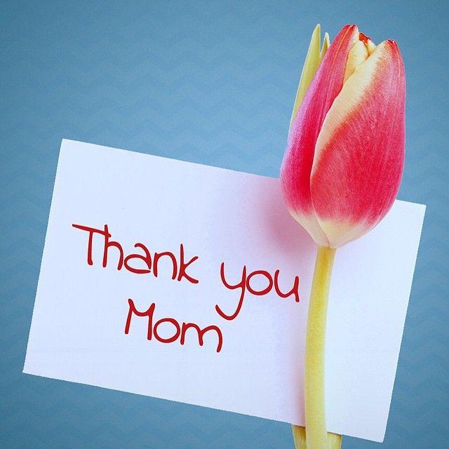 thankyou mom tulip.JPG