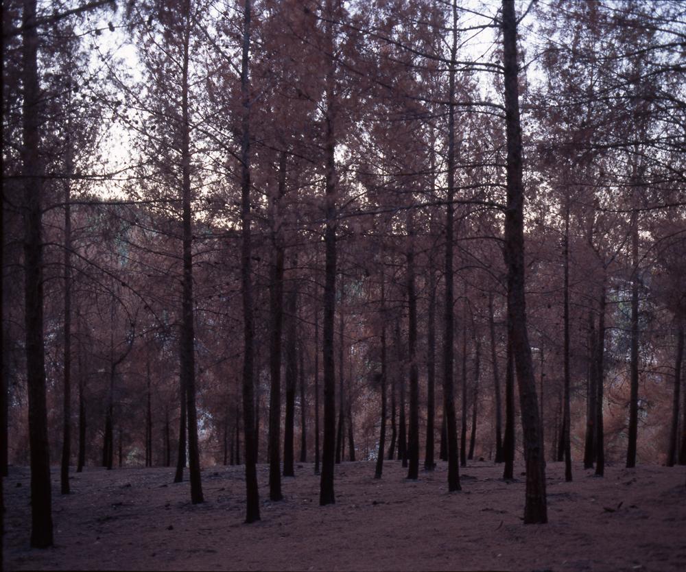 006-burn forest-1-lr.jpg