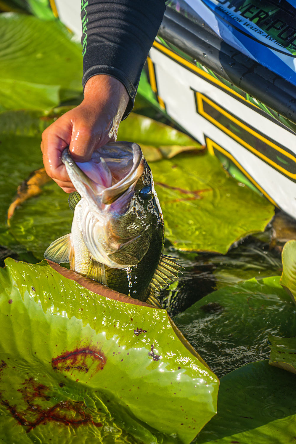 Find the right grass mixtures, and you can really load the boat with some natural lake bass.