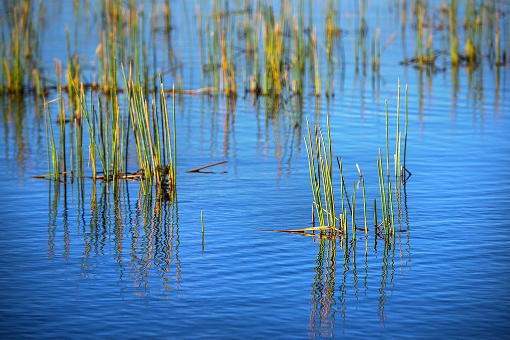 Lake Okeechobee bass fishing revolves around its large grassy flats. Photo: Jason Stemple