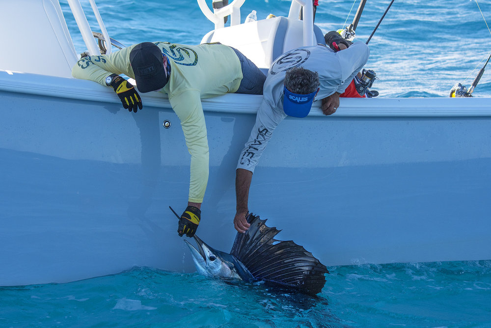 Captains Scott & Steve of Into The blue show off their Sailfish