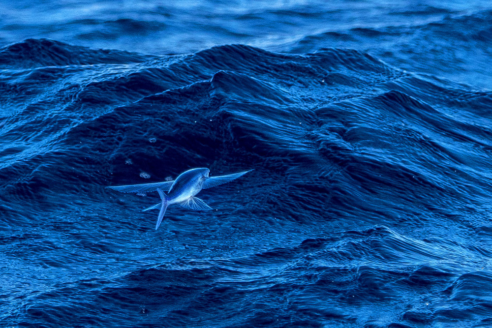 The Flying Fish soars as we set out for some swordfish.