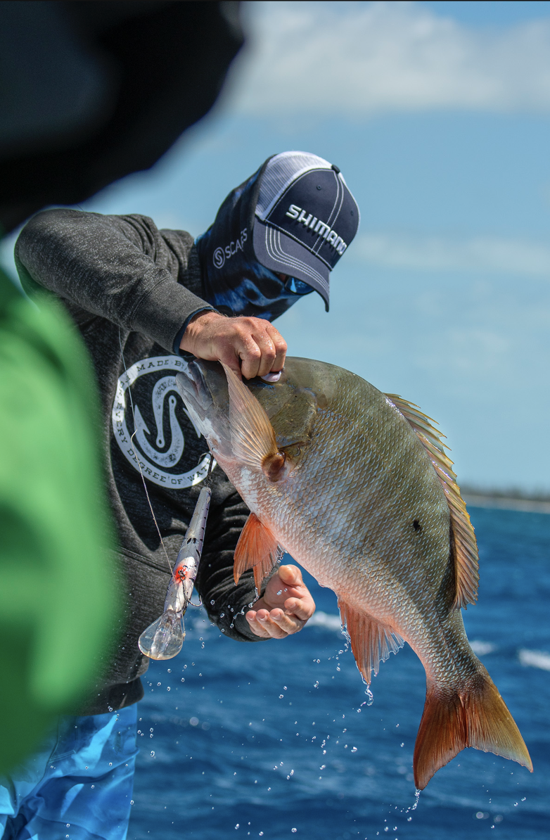 NEW ARTICLE   Handle 4 Dangerous Fish Like A Pro    Read More
