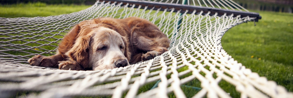 dog-resting-in-a-hammock-cropped.png