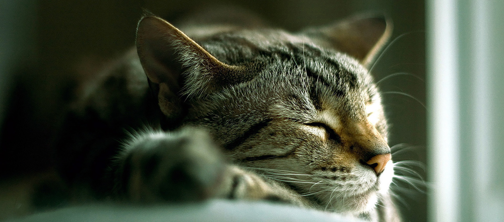 a-cute-cat-sleeping-254213-larger.png