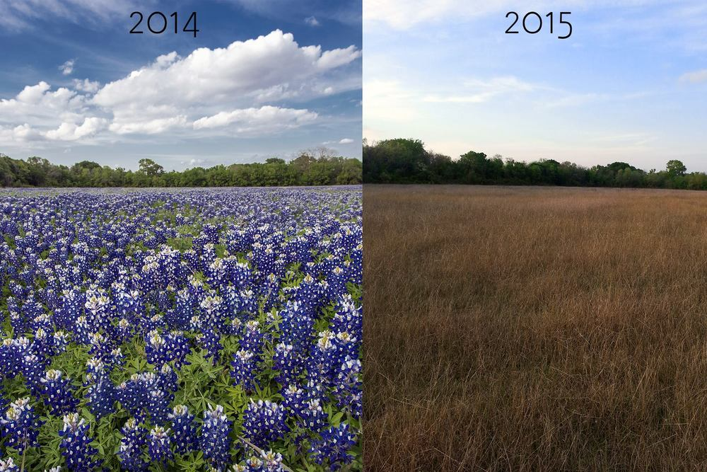 Same location in the same field in Round Rock, Texas. Shots were taken one year apart.