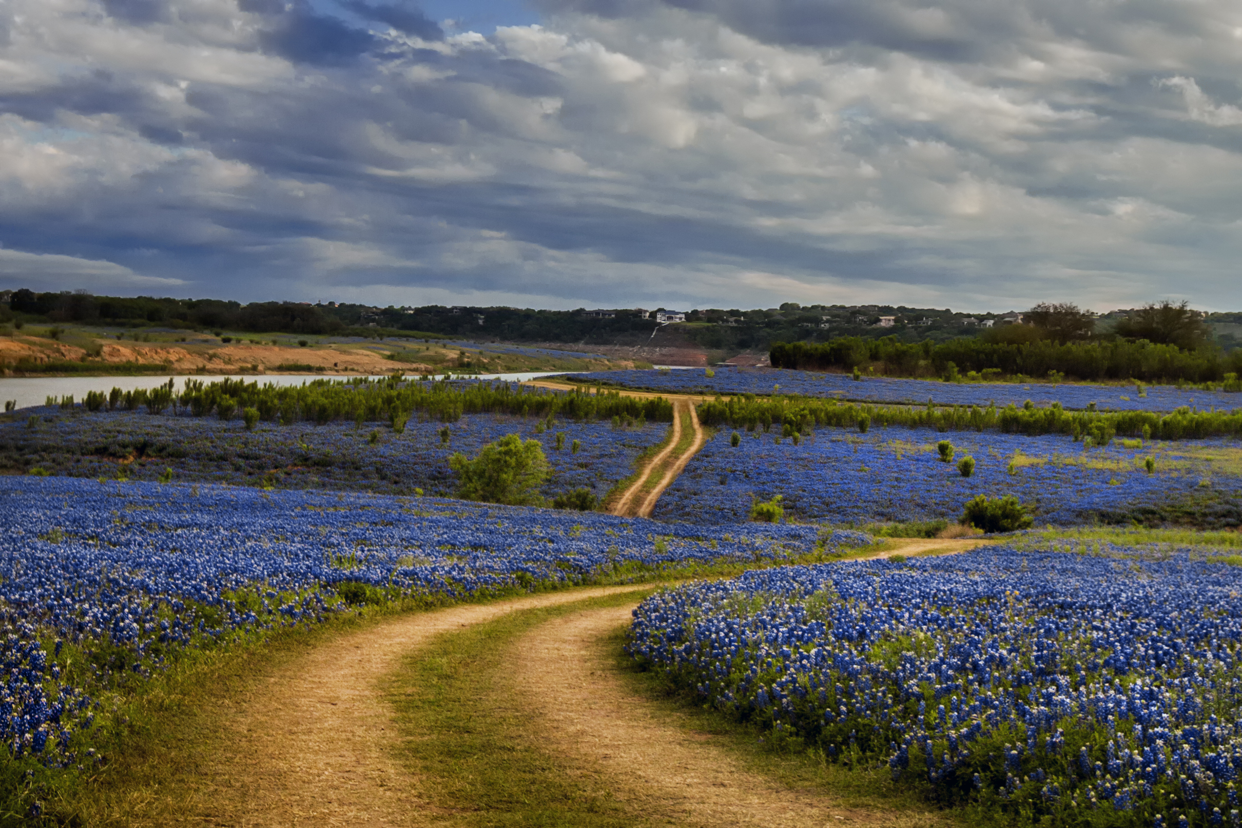 Where To See The Best Bluebonnets In 2017 Jason Weingart Photography