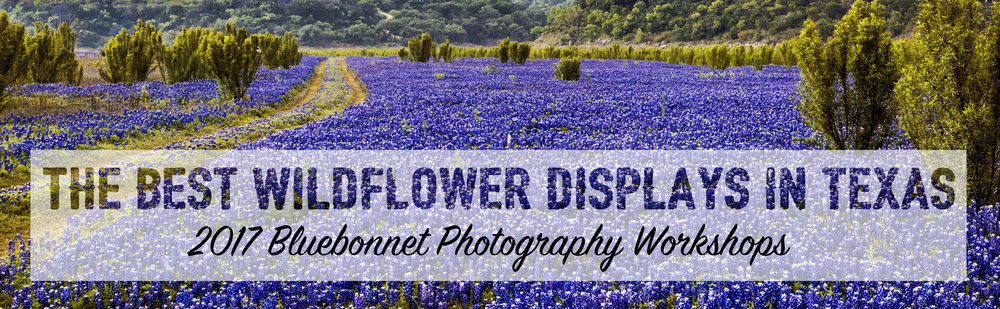 Texas Bluebonnets 2017 workshop tour location locations places spots where see photography photographer
