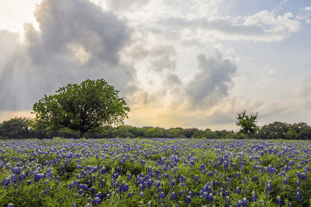Texas hill country bluebonnets 2018 where locations to see