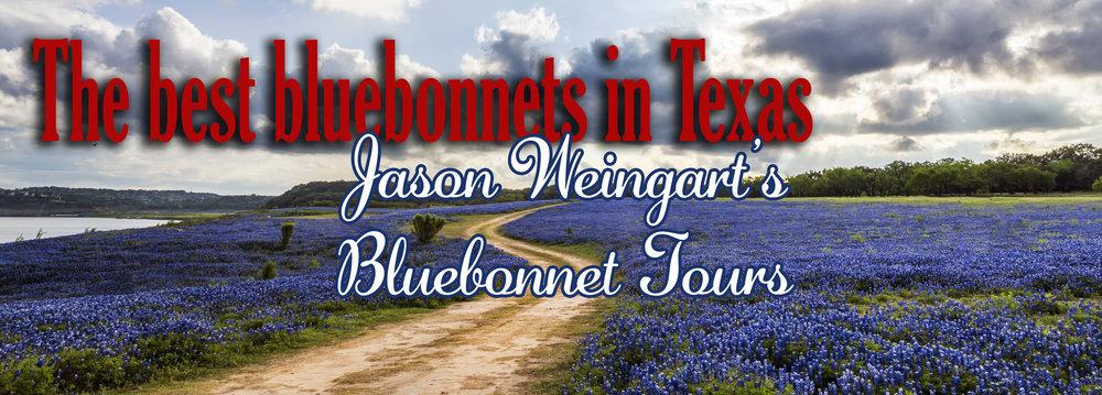 bluebonnets