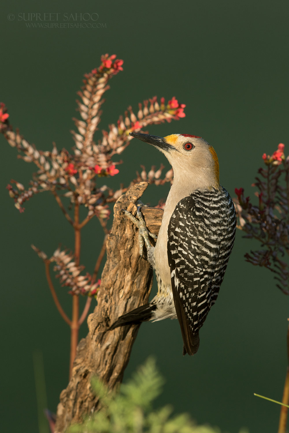 Capture tack-sharp images of rare birds.