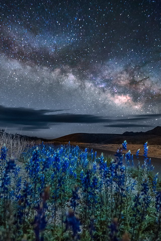 Milky Way and Bluebonnets
