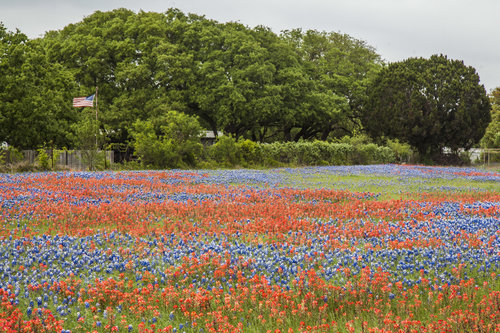 The mixture of colors in the Hill Country can be impressive.