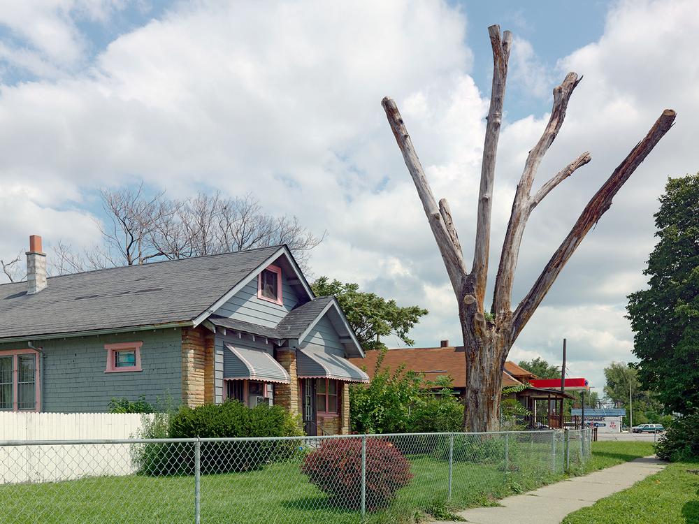 Tree-Stump-21,-Detroit-2011.jpg