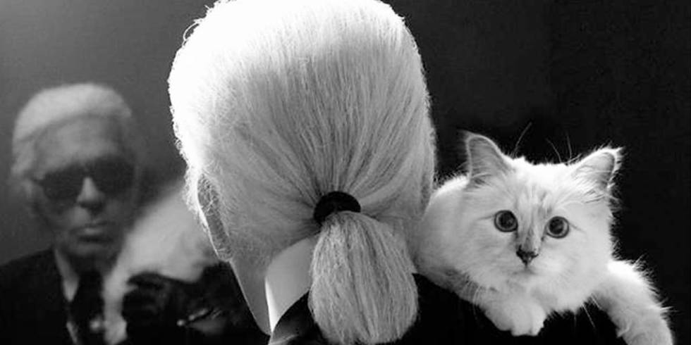 Karl Lagerfeld says his fluffy white siamese, Choupette, is a 'famous beauty' and is his muse.  She even has her own twitter account.