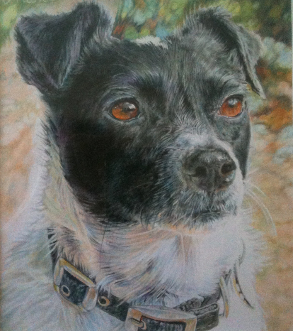 'Milo' Colour Pencil 13cm x 13cm