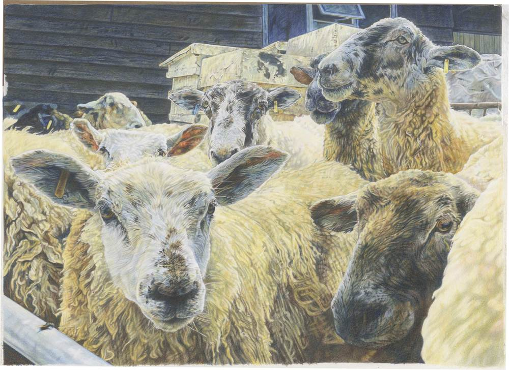 'Sheep at beehive' Colour Pencil 35cm x 26.5cm