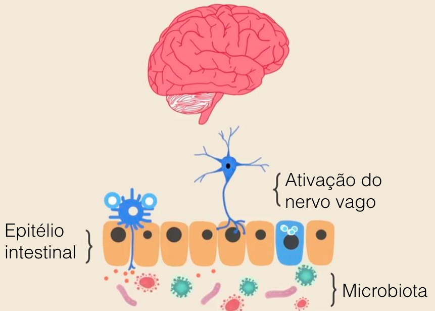 Fonte da imagem: http://www.ozy.com/fast-forward/autisms-gut-brain-connection/33302