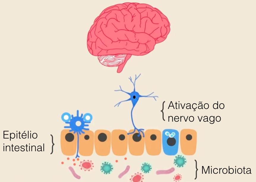 Fonte da imagem:http://www.ozy.com/fast-forward/autisms-gut-brain-connection/33302