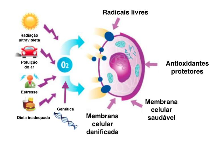 Causas do estresse oxidativo. Adaptação de: http://www.barrekailua.com/