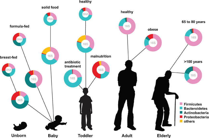 Fonte: Ottman et al., 2012