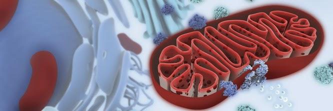 Fonte da imagem:http://cienciadamitocondria.blogspot.com.br/