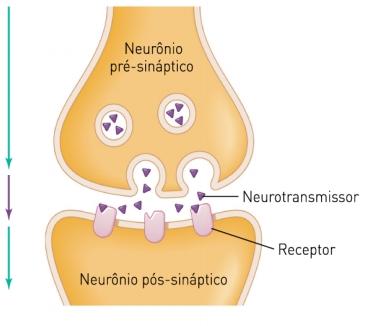 sinapse-quc3admica.jpg