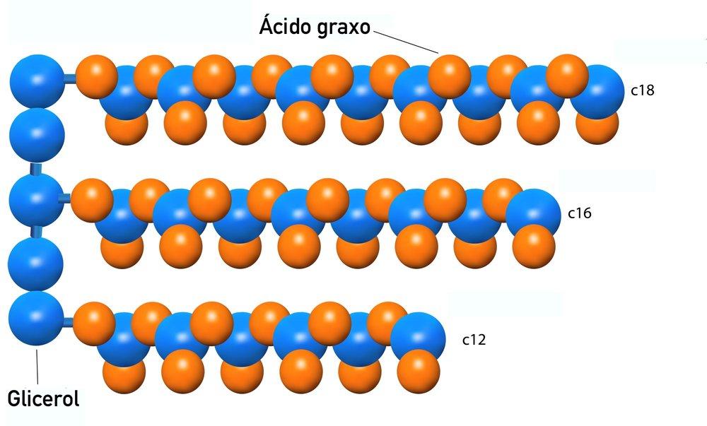 Formula-abreviada-de-uma-molécula-de-triglicerídeos-de-gordura.jpg