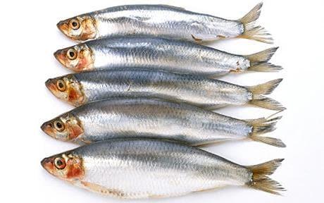 fish_1371933c.jpg