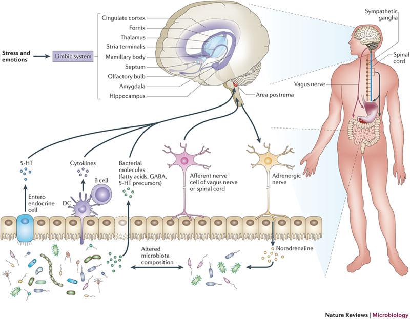 NRM-Gut-brain-picture-2.jpg