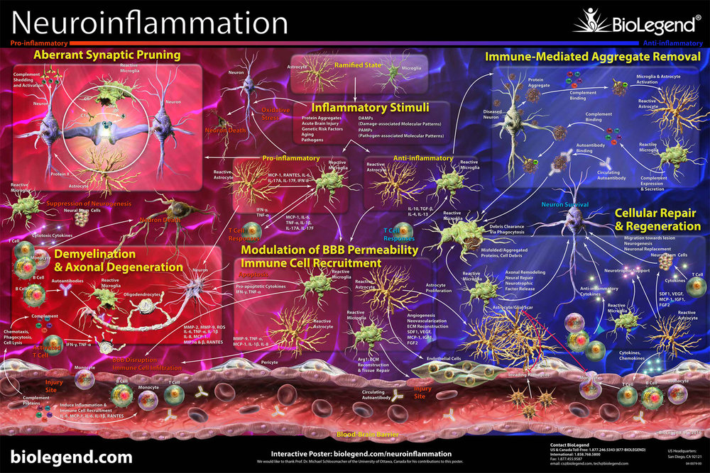 Neuroinflammation.jpg