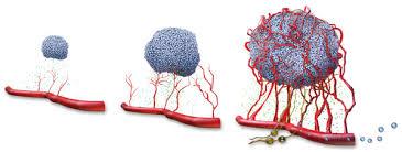 angiogenese.jpeg