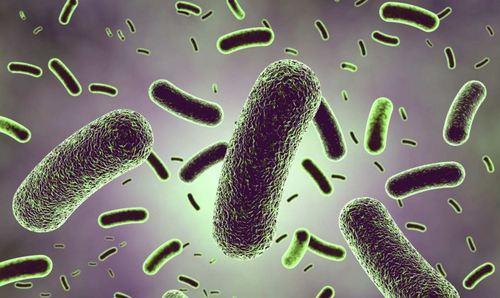 lactobacilos.jpg