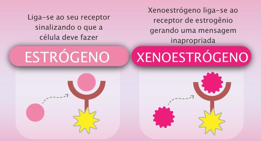 xenoestrogen.jpg