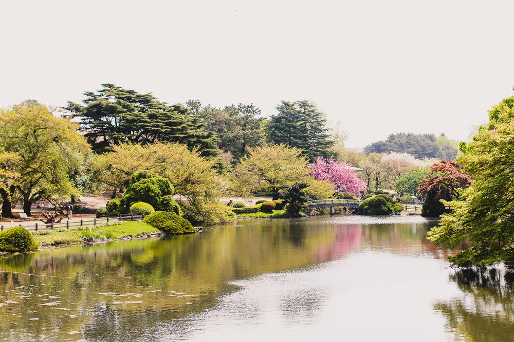 shinjuku gyoen national park japan tokyo blog cherry blossoms