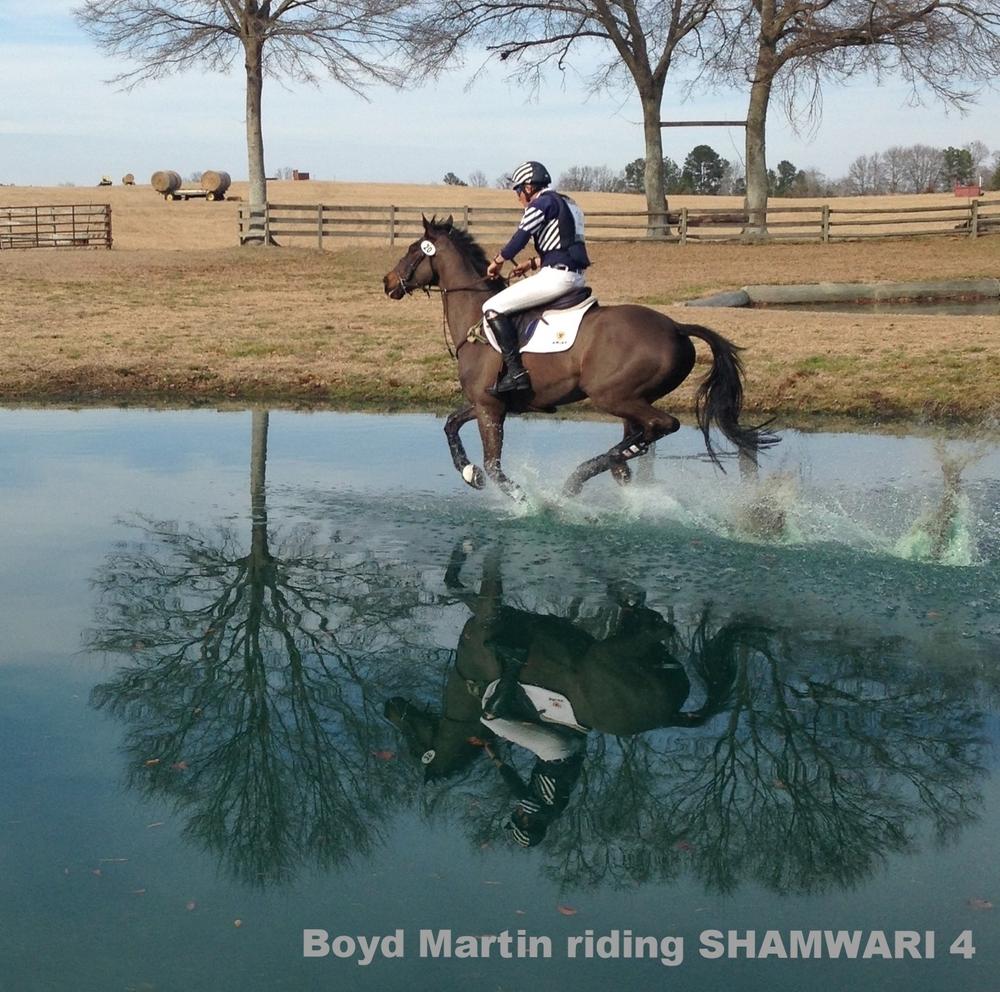 Boyd Martin riding SHAMWARI 4