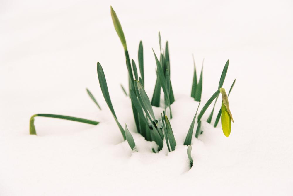 Massachusetts Spring (Canon 1v :: Portra 160) 84/366