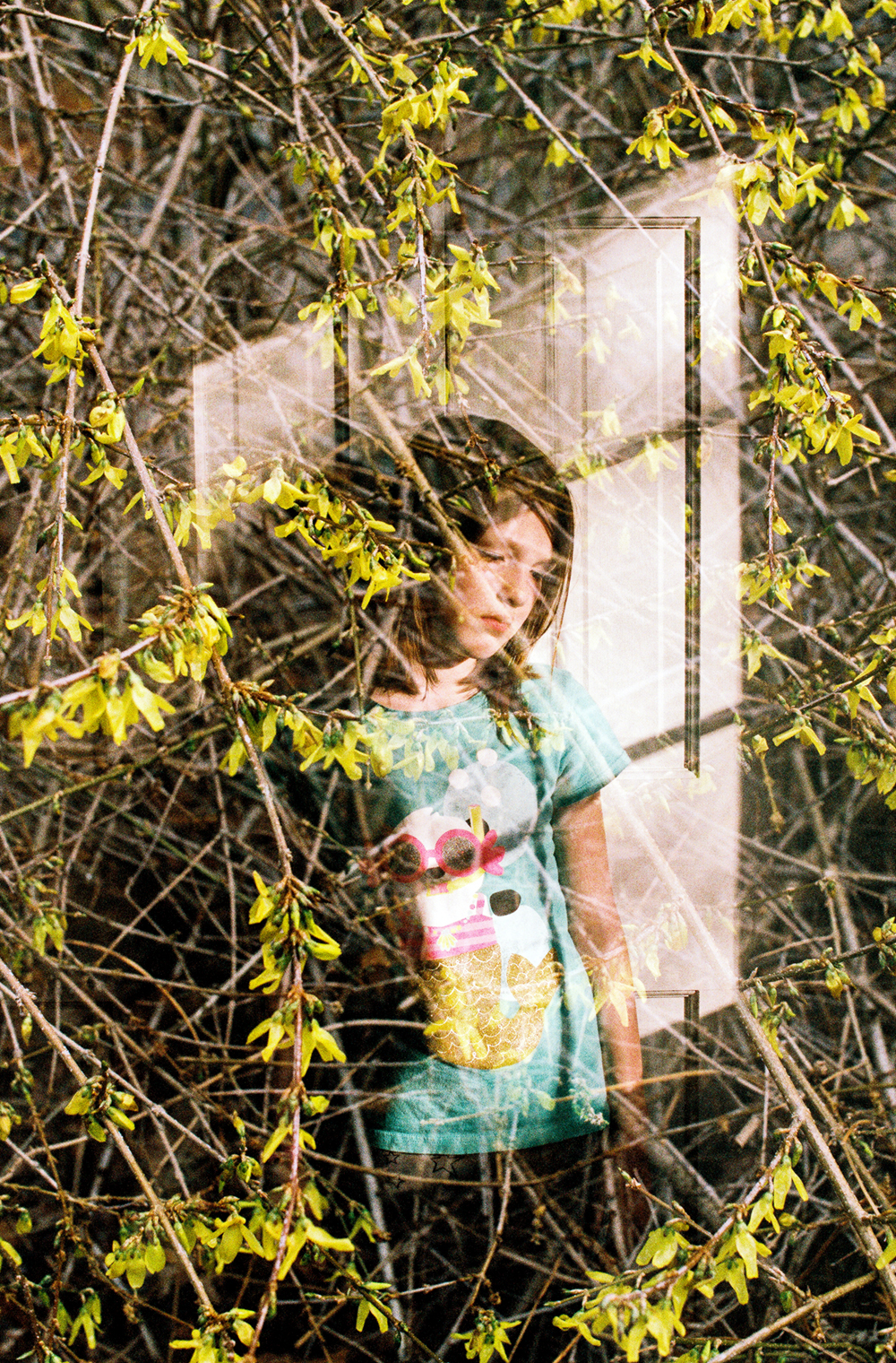 Forsythia Double Exposure (Canon 1v :: Fuji400h @320) 102/366