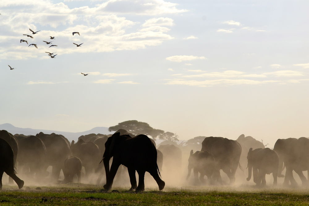 safari with h2o extreme team