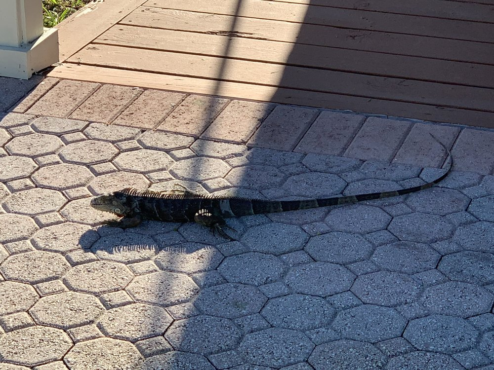 Even the lizards like the weather here.