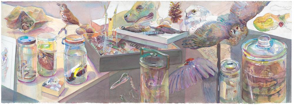 Peggy Macnamara   Zoology Cabinet , 2015 watercolor on paper