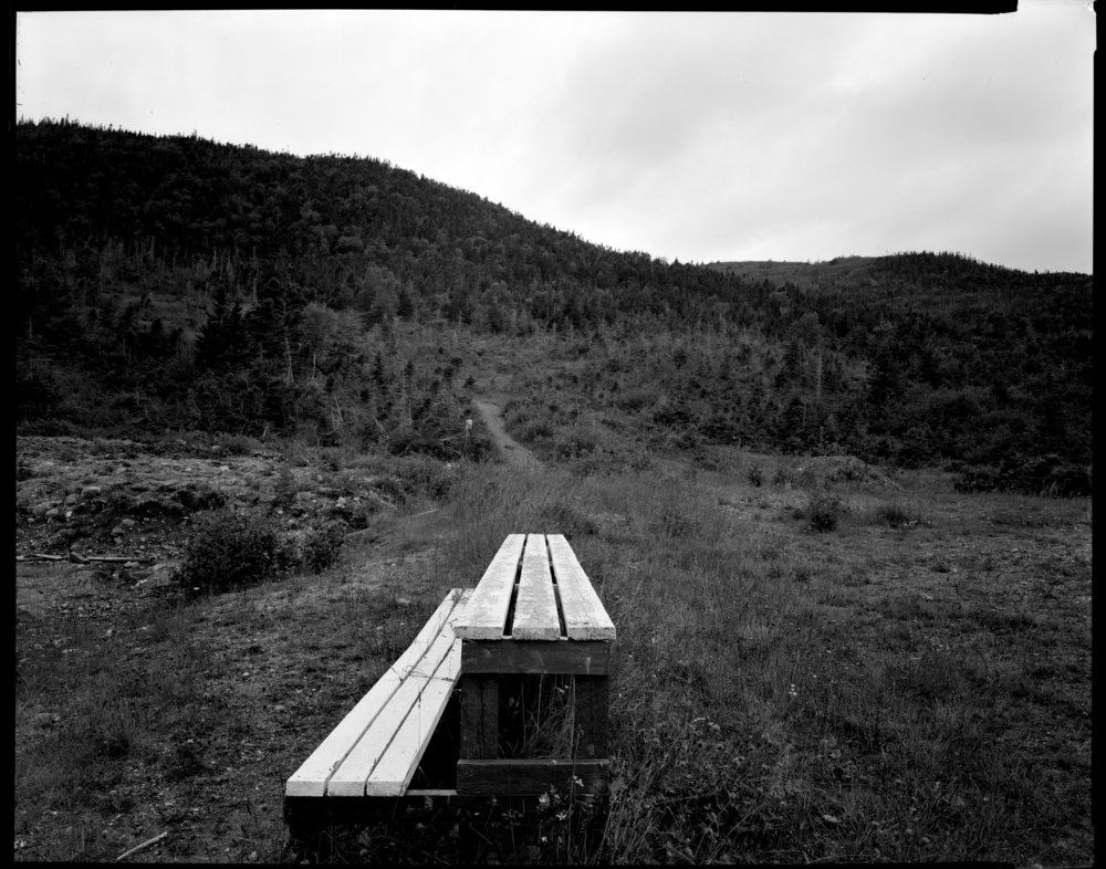 woody point,  2005 platinotype