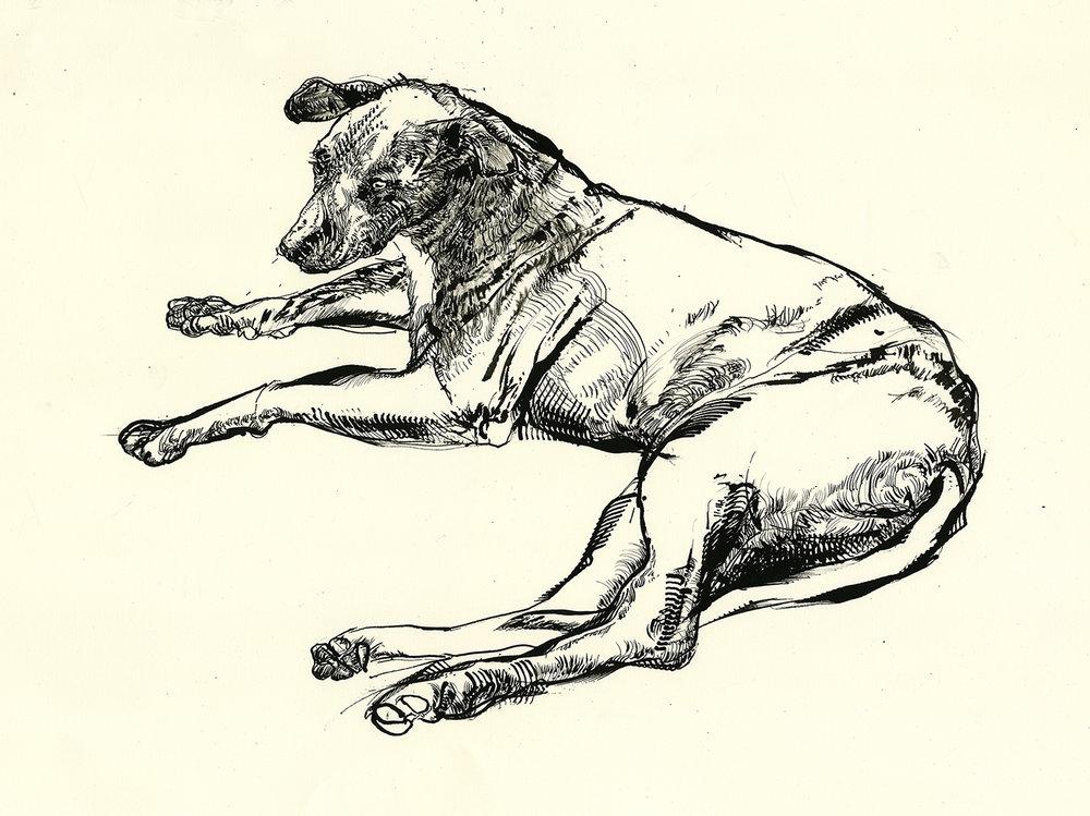 Oaxaca dog 2-72.jpg