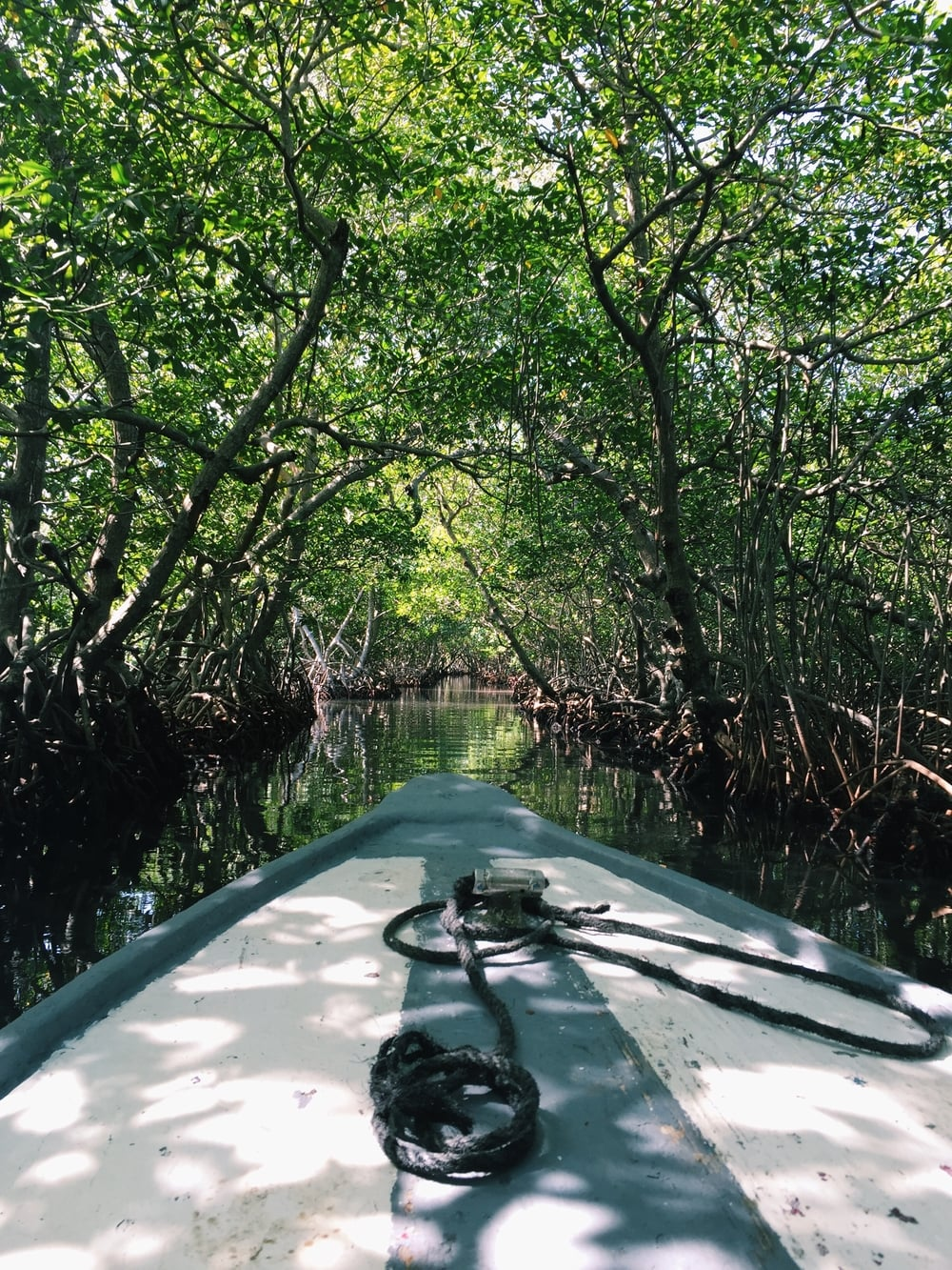 We took a tour of the mangroves!