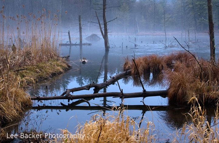 Beaver Pond, Winter Fog