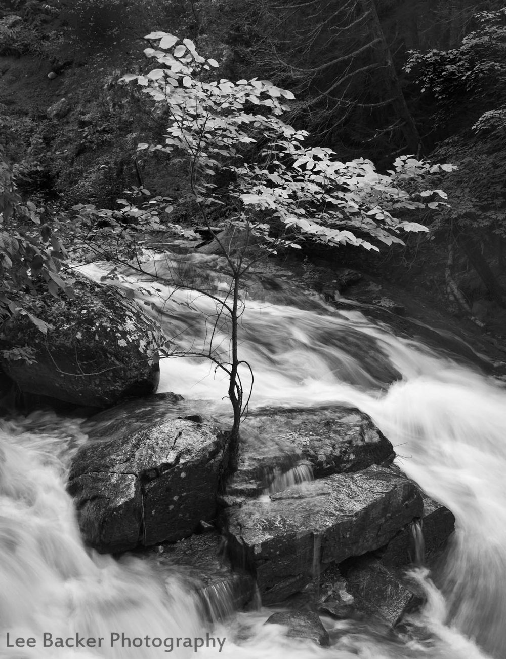 Tree at Umpachene Falls